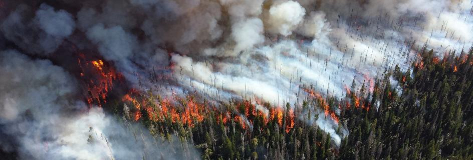 Forest fire seen from the sky
