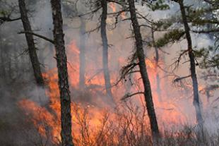Prescribed burn in the Pine Barrens of New Jersey, USA