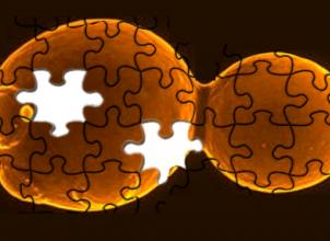 The Sc2.0 logo